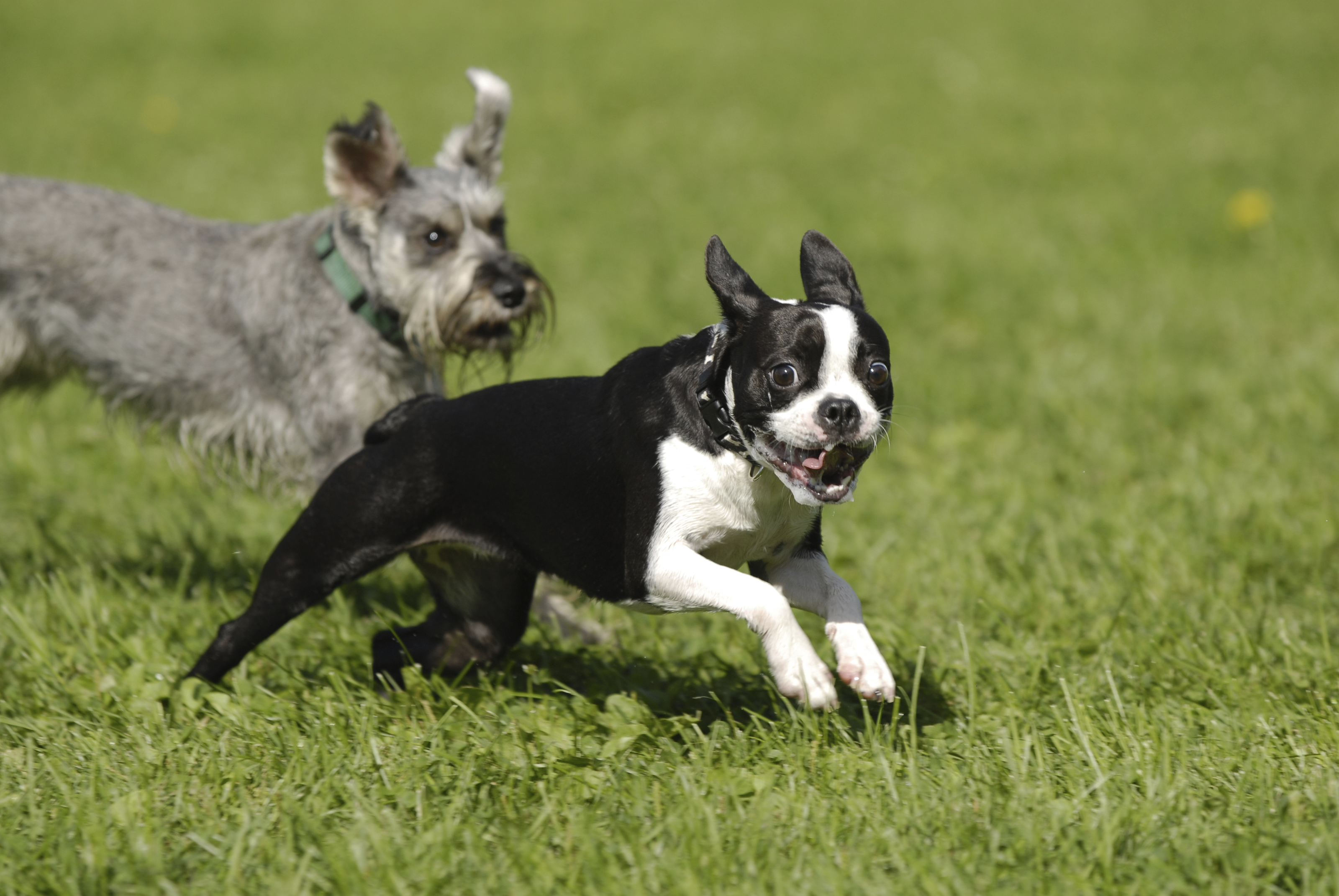 Safe and Fun Dog Daycare in Olalla and Gig Harbor | Peninsula Pet Lodges