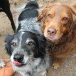 gig-harbor-dogs-054