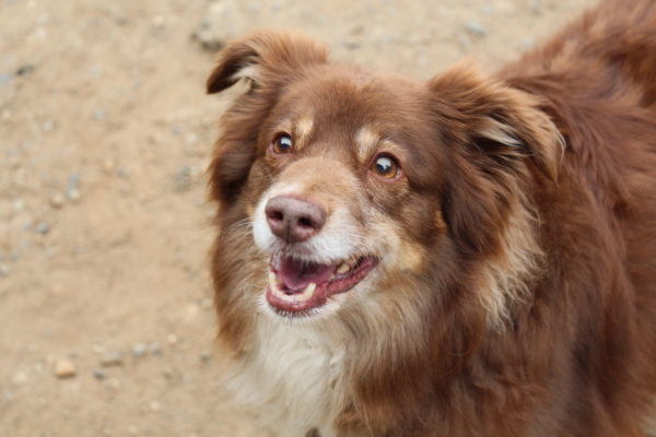 safe and fun dog daycare in olalla and gig harbor